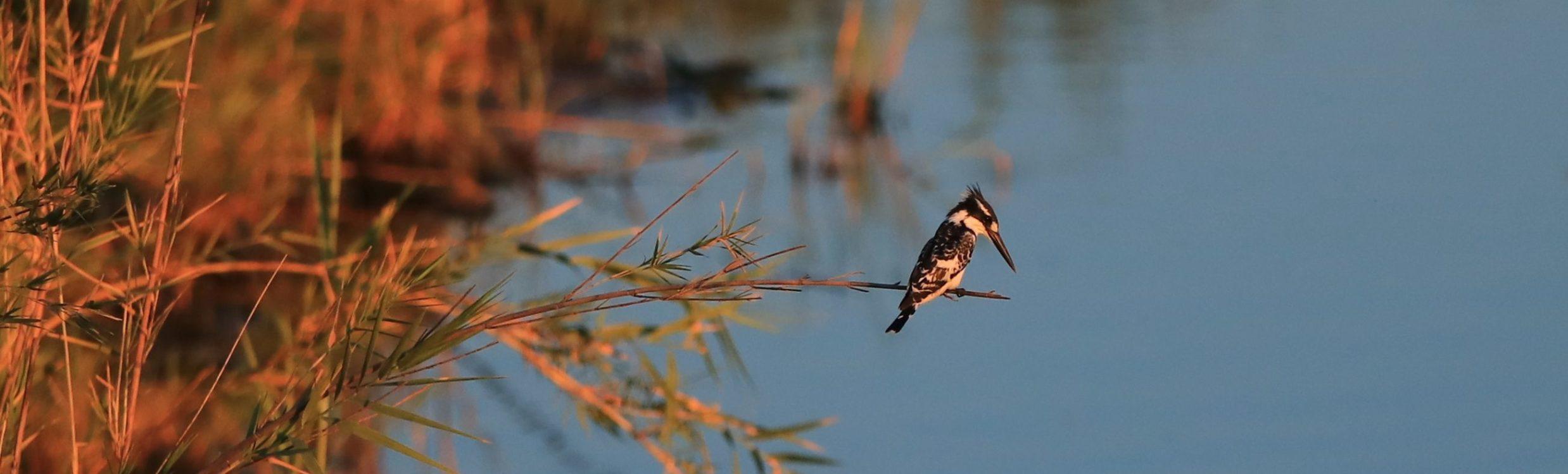 Botswana, Chobe River ©Horst Reitz