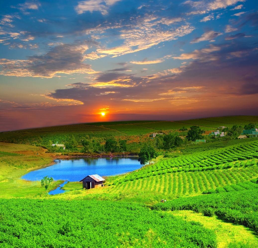 Vietnam Tee Plantage zentrales Hochland ©123RF